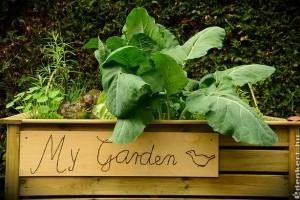 Építsünk emelt ágyást a fűszernövényeinknek!