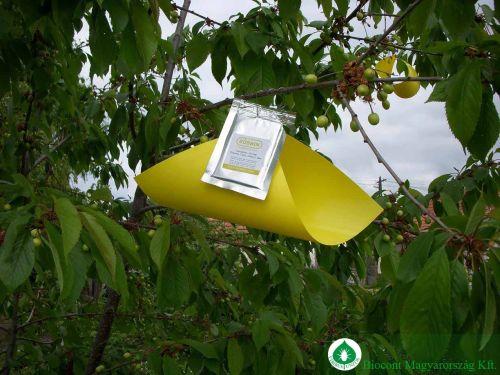 Biokont cseresznyelégy színcsapda