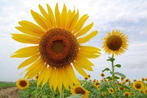 Miért ültessünk virágot és fűszernövényt a zöldségek közé?