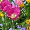 Hogyan válasszuk ki az ültetésre alkalmas virághagymákat?