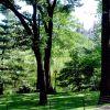 Világhírű parkok: A Central Park  10 legszebb virágos helye 1. rész