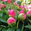 Csokorba szedhető virágoskertek! 1. rész