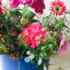 Hogyan válasszunk vágott virágnak alkalmas évelőket kertünkbe?