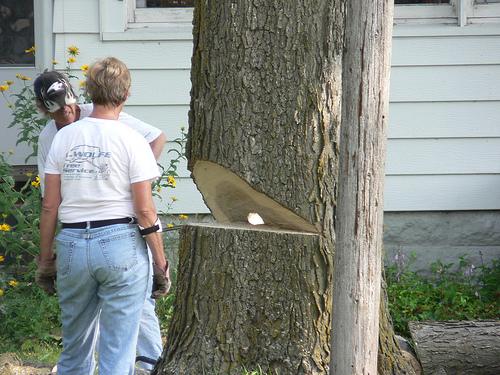 fa kivágása