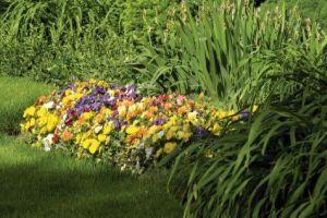 Bízza kertjét nyáron is a Scotts Díszpark műtrágyákra!