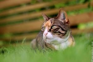 Hogyan akadályozzuk meg a macskát, hogy a virágágyásokban vagy  a kertben végezze el a dolgát?