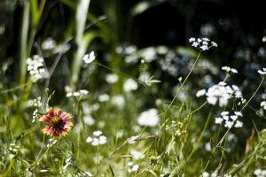 Őshonos növények -  Miért tanácsos őshonos növényeket ültetni lakókörnyezetünkben?