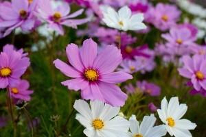 Melyek a legkönnyebben termeszthető kerti növények? 1. rész