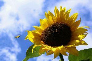 Melyek a legkönnyebben termeszthető kerti növények? 2. rész