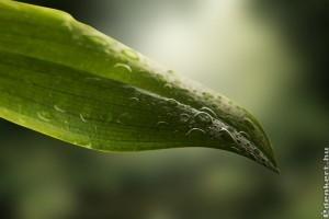 Miért érdemes rendszeresen tisztogatni a szobanövények leveleit?