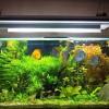Akváriumi növények – melyik a jobb? A valódi vagy a mesterséges?