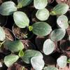 Az ültetés kezdete – Csíráztatástól a palánta előneveléséig