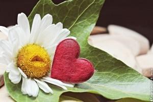 Melyik növény, mit  jelképez?- A virágok szimbolikája 1. rész