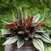Milyen szobanövényeket tehetünk ki nyárra a szabadba?