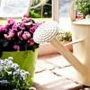 Hogyan frissítsük fel kókadozó szobanövényeinket?