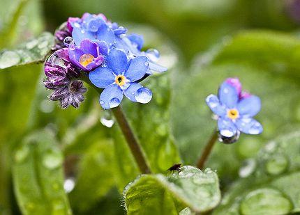 vizes-virág-locsolás