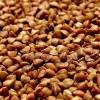 Gluténmentes alternatíva: hajdina tippek