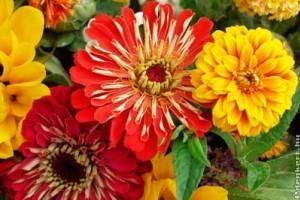 Milyen nyári virágokat ültessünk cserépbe?