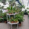 Melyek az üvegházban könnyen nevelhető virágok, növények?