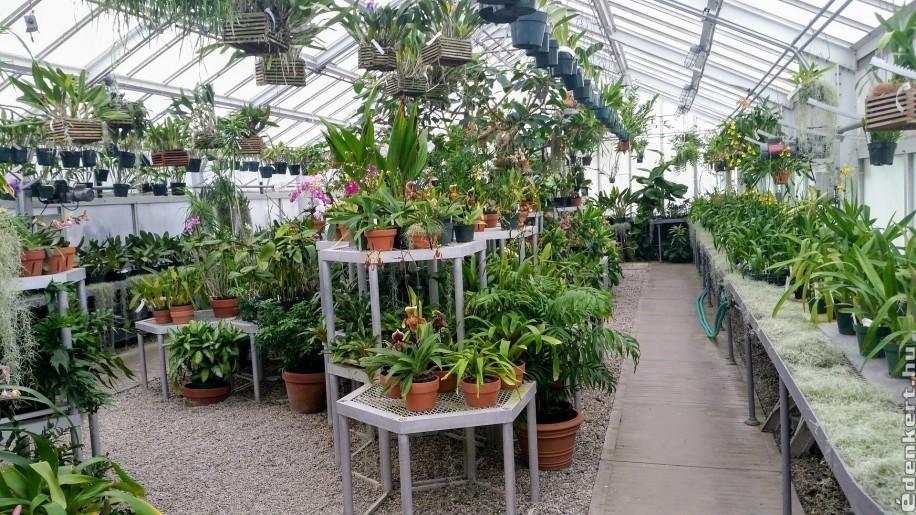 3 növény, ami nagyon jól érzi magát az üvegházban