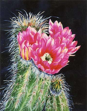 Hogyan neveljük és gondozzuk a húsvéti kaktuszt