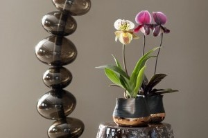 A Paphiopedilum orchidea titka!