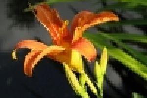 Milyen növényt ültessünk árnyékos tavunkba?