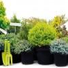 Milyen törpe örökzöldeket használjunk egy kerti oázis kialakításához?