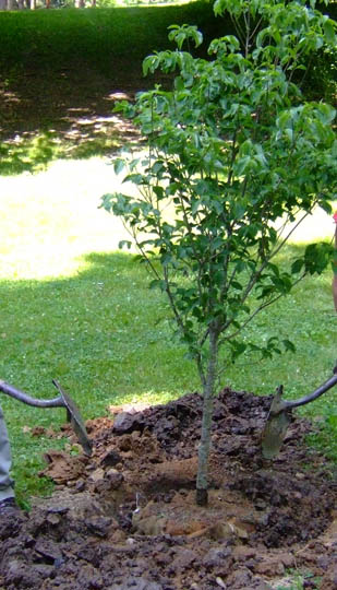 fa ültetése