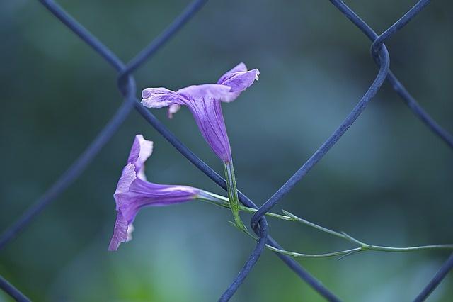 flora-1490483_640