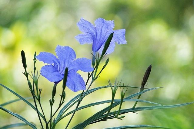flower-2654761_640