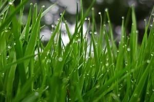 Tönkremehet a gyep a sok esőtől?