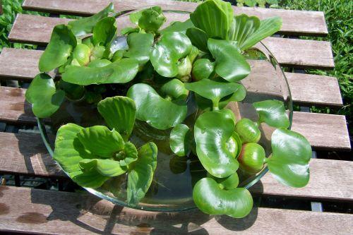 növényes tál