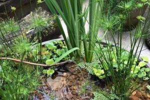 Hogyan építsünk tavat, dézsakertet a teraszunkra?