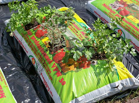 zsákos növénytermesztés