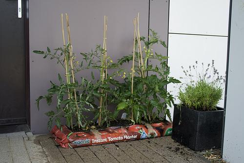 zsákos növények
