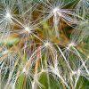 Szokatlanul agresszív allergiaszezon várható! Mit tehetünk?