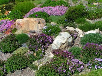 Tatárvirág (Iberis)