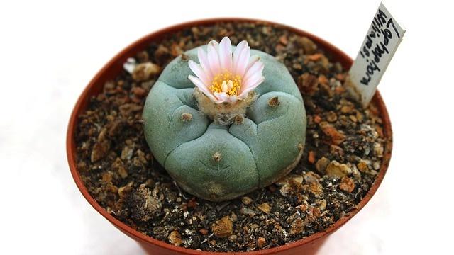 cactus-1397678_640