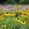Milyen virágok nyílnak júliusban?