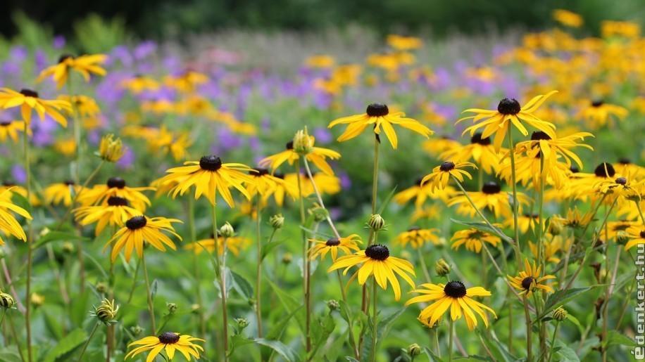 A legszebb júliusban nyíló kerti virágok