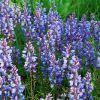 A 10 legismertebb virágfesztivál New Englandben és New York államban - 1. rész