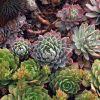 Hogyan díszítsük a kertünket pozsgás növényekkel? - 1. rész
