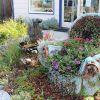 Hogyan díszítsük a kerti dombot pozsgás növényekkel? - 3. rész