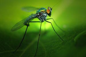 Milyen rovarcsapdákkal védekezzünk a nyári rovarinvázió ellen?