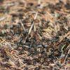 Hogyan szabaduljunk meg a hangyáktól természetes módon? - 2. rész