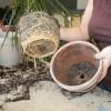 Hogyan válasszunk növényt a kertészetben?