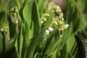 Az 5 legszebb talajtakaró növény