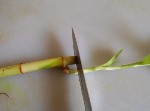 bambusz3