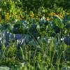Ötletek a zöldséges kert kialakításához